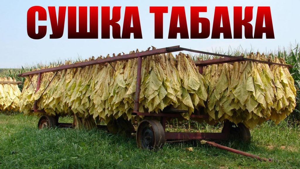 suska