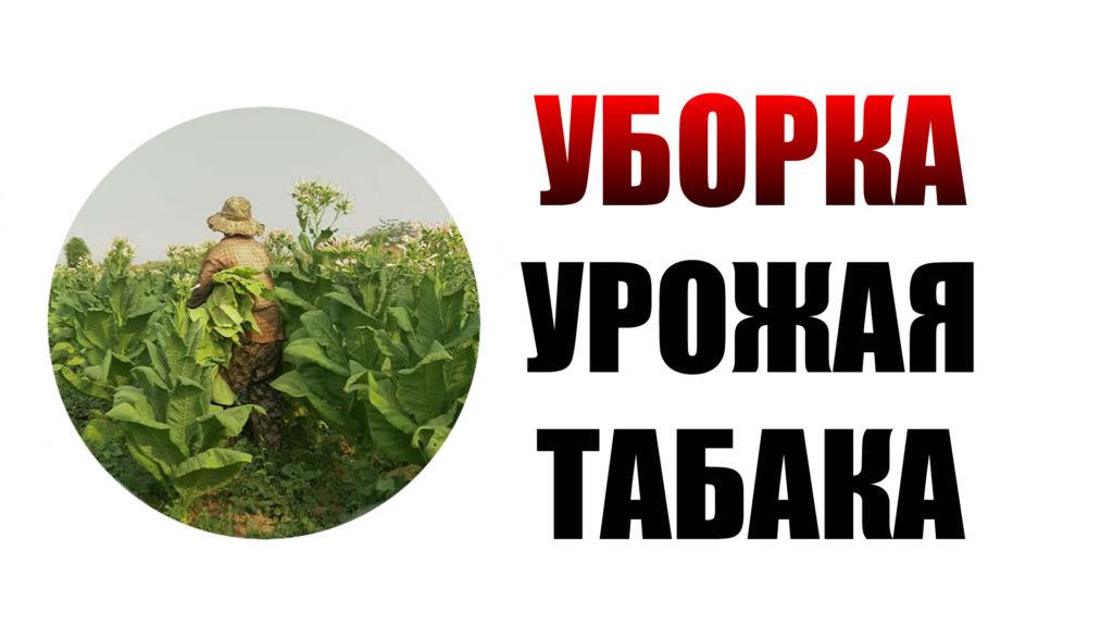 uborka_urojaya